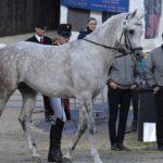 Investire sui cavalli da corsa conviene?